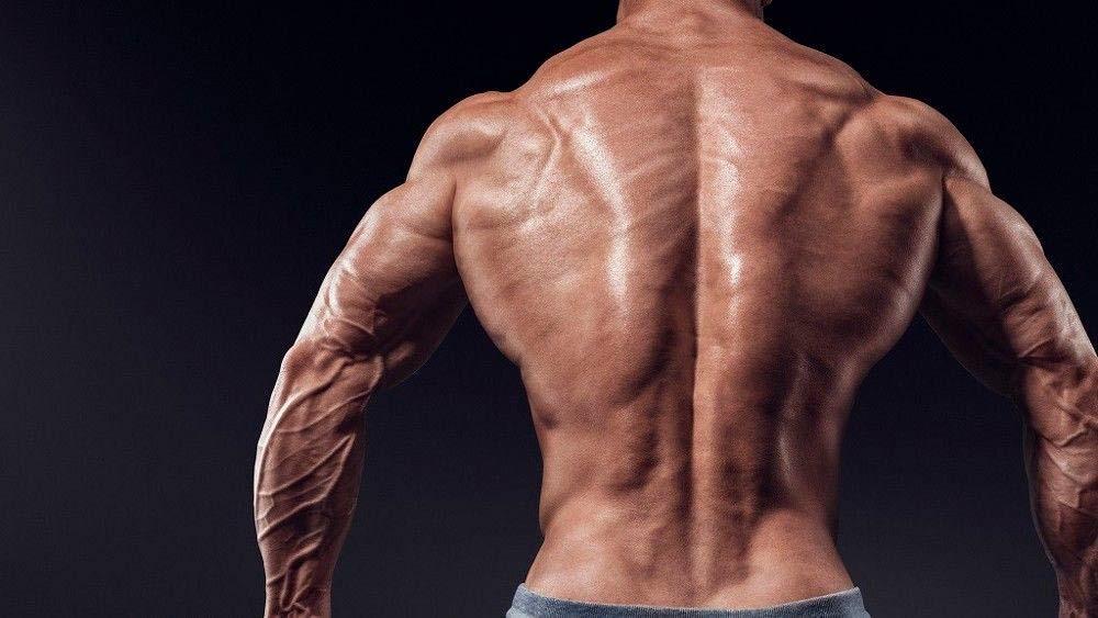 Как накачать крылья мышцы