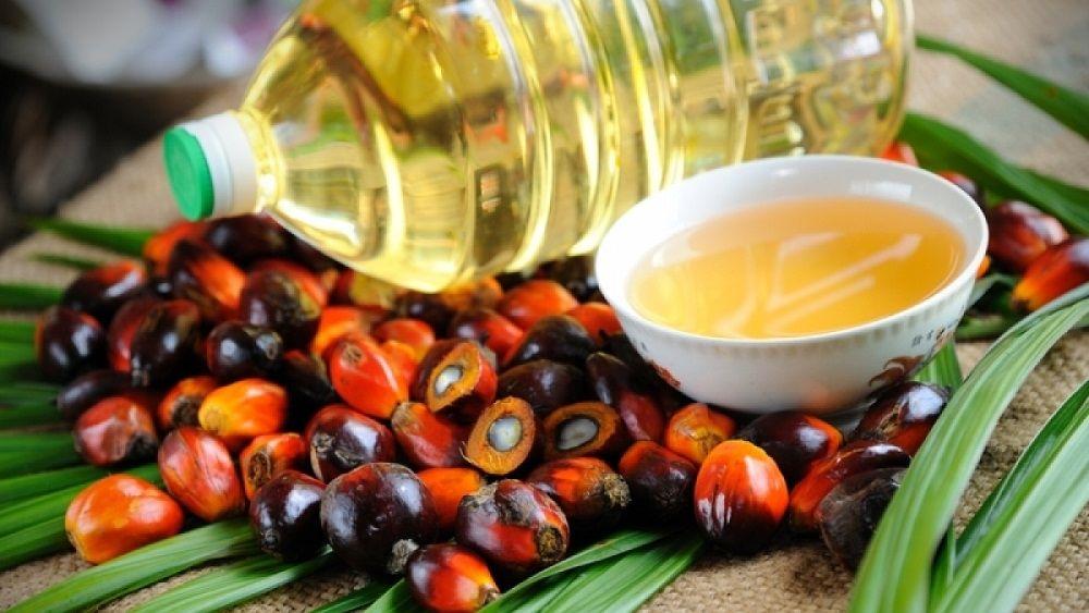 Полезно ли пальмовое масло для нашего здоровья?